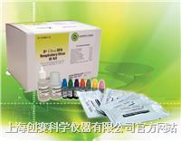 革兰氏染色液试剂盒 C01-HB8278