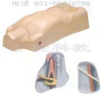 醫學教學模型|中心靜脈注射穿刺軀干訓練模型 KAH/L69A