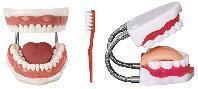 護理模型|牙護理保健模型 KAH/11