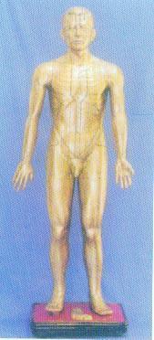 人體針灸模型|針灸銅人    GD-04010