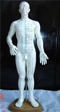 人體針灸穴位發光模型 GD/C10010