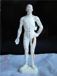 人體針灸經穴奇穴模型(26CM)|上海红杏视频永久科教設備有限公司  GD/C10011