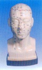 人體頭部針灸穴位模型(頭部四功能針灸腧穴模型20CM)|上海红杏视频下载安装黄科教設備有限公司  GD/C10012
