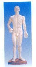 人體針灸模型(全皮膚、半皮膚60CM)|上海红杏成版人app下载科教設備有限公司  H016