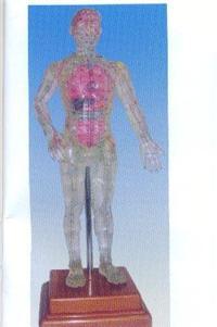 透明人體針灸模型(透明可見內髒針灸穴位模型50CM)|上海红杏视频app下载科教設備有限公司  H017-3