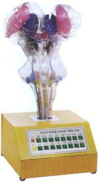 人體解剖模型|電動腦幹模型 GD/A18216