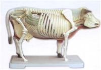 牛骨骼模型  -SX