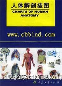 医学教材|人体解剖挂图运动系统挂图 CBB-GT-1(51张)