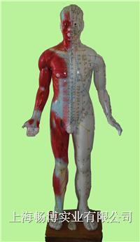 中医针灸模型 十四经穴模型 GD/C00003