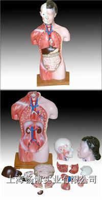 人体半身模型|女性躯干模型15件  CBB-XC-202B
