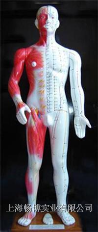 人体针灸穴位模型 半皮肤人体针灸模型(十四经穴模型68CM) CB206