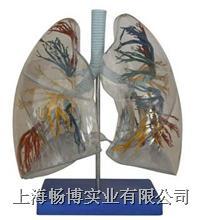 透明肺段  XC-330