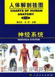 医学挂图|《人体解剖挂图》-神经系统挂图 CBB-GT-6(45张)
