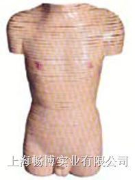 人体影像诊断病理模型|男性躯干横断断层解剖模型 SMR02