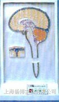 电动医学模型|脑脊液循环电动模型 SME17