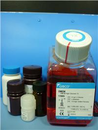 Collagenase膠原酶I(原裝) orj-1020
