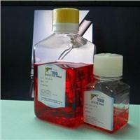 TBD哺乳動物內皮細胞液體完全培養基 NP2003