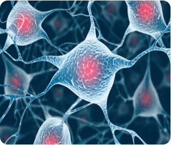 细胞及分子生物学产品