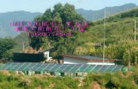 太陽能發電 太陽能發電廠 太陽能發電場工程公司