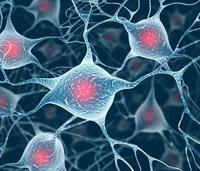 細胞共培養